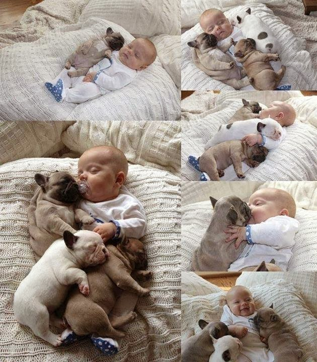 Adorable puppies sleeping with a little baby