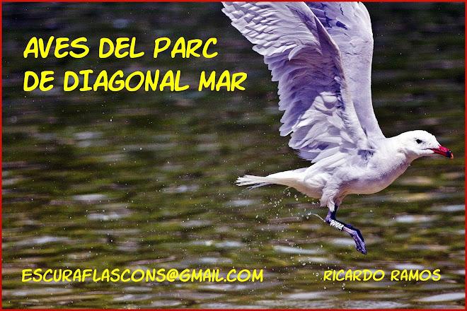 AVES-OCELLS-BIRDS DEL PARC DE DIAGONAL MAR