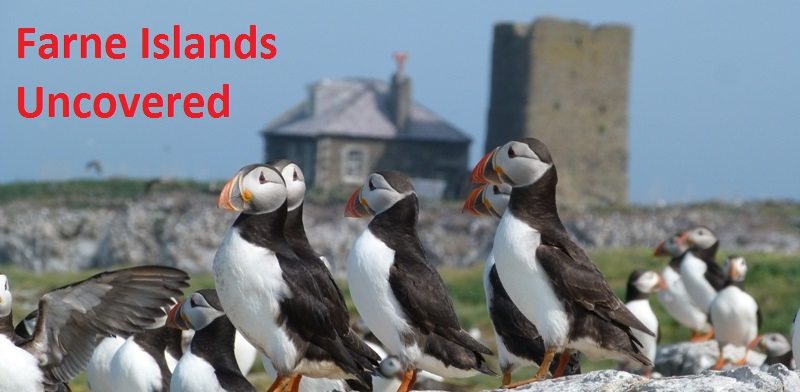 Farne Islands Uncovered