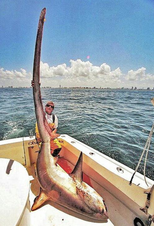 Biggest Shark Ever Cau...