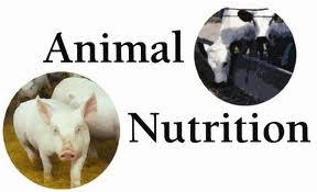 Dinh dưỡng trong chăn nuôi heo. Ảnh minh họa.