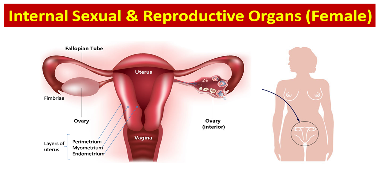 Science - 8th Grade: Female and Male Reproductive Anatomy