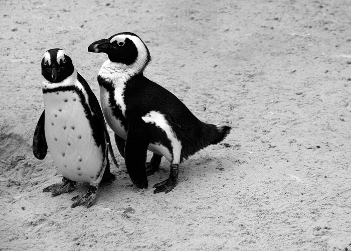 Neunzehngrad, 12von12 Januar Zoo Münster