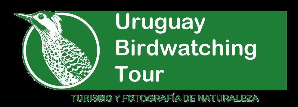 Uruguay Birdwatching Tour