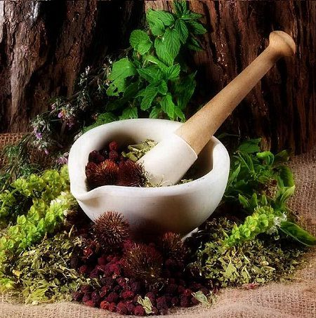 Medicinally Useful Herbs available in Gujarat, India