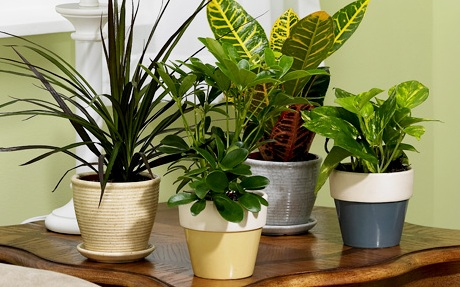 7 usos incre bles de la cascara de pl tano memexicanitos - Las plantas de interior ...