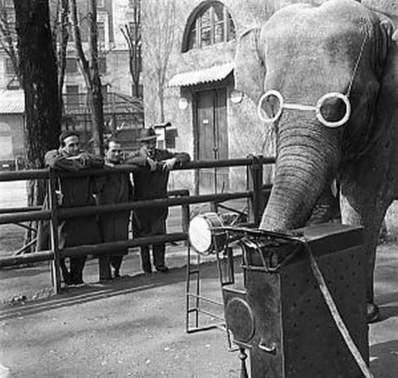 Storie di milano lo zoo dei giardini pubblici di milano - Parco di porta venezia ...