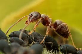 النمل, المثقف العربي,النملة