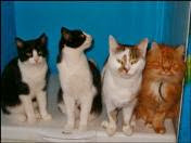 Cuatro gatos
