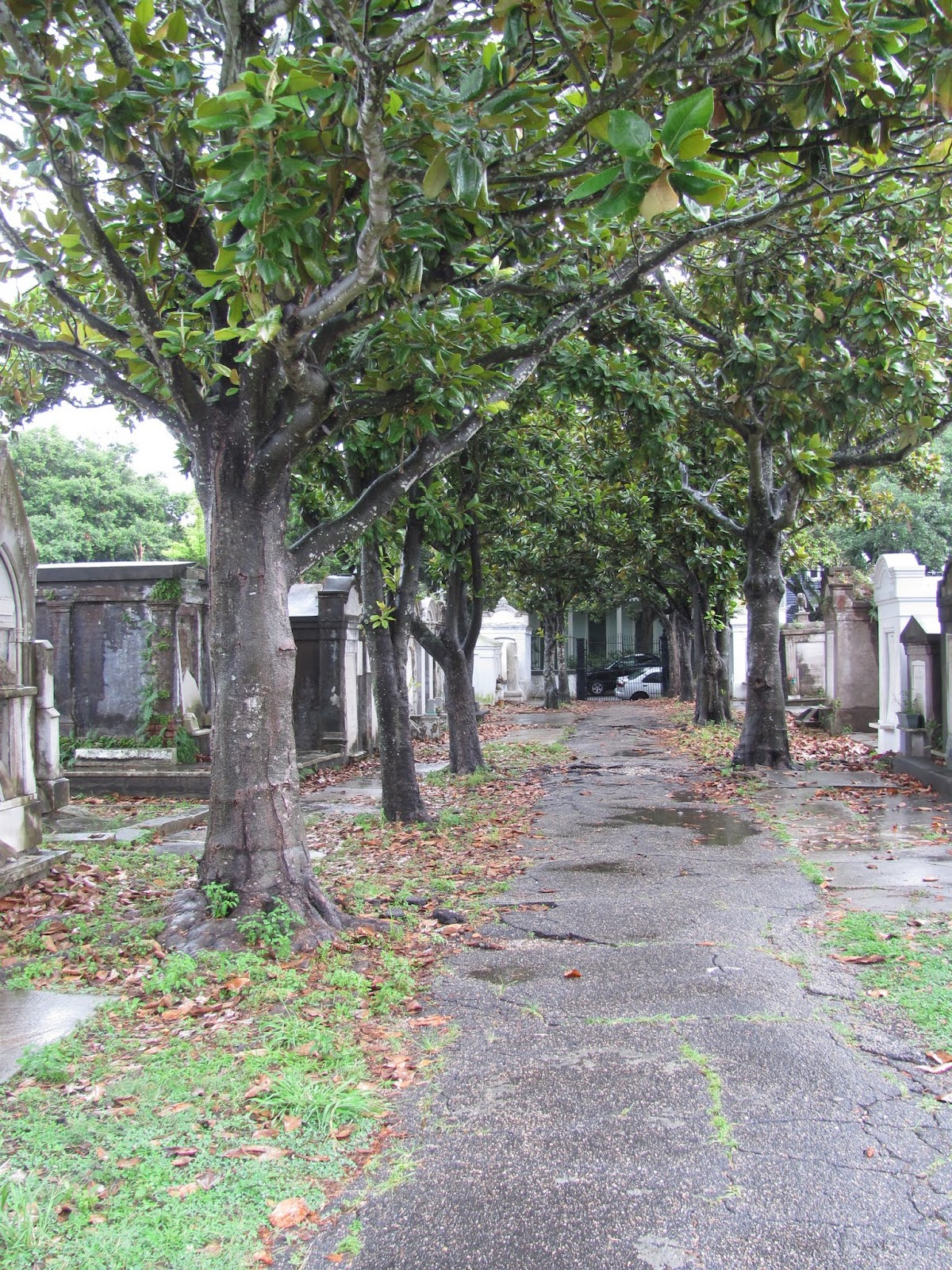 Wet pavement marks the path at LaFeyette Cemetery in New Orleans, LA