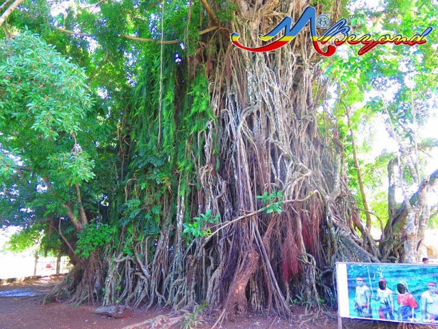 balete park, balete park in baler, what to do in baler, places to visit in baler, baler tourist attraction, best of baler, baler itinerary