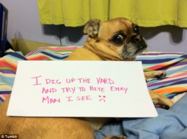 Bad Boy Pet Owners Share Their Frustration With Their