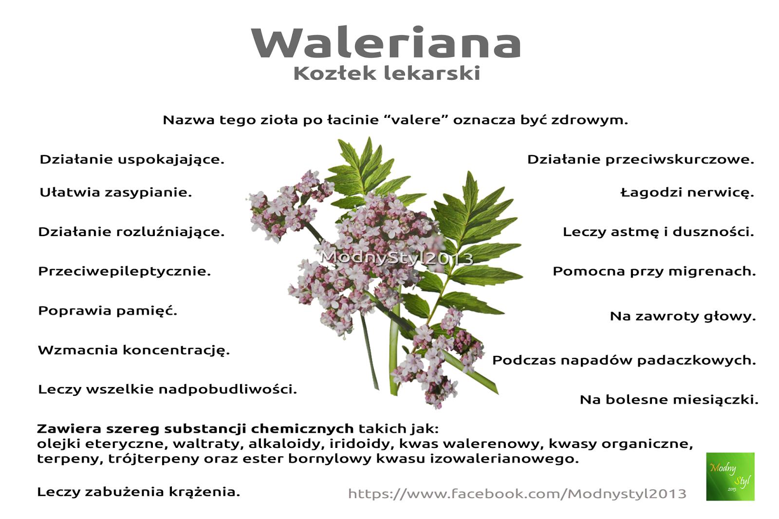 Waleriana czyli kozłek lekarski
