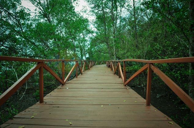 Tiket Masuk Hutan Mangrove Batu Karas