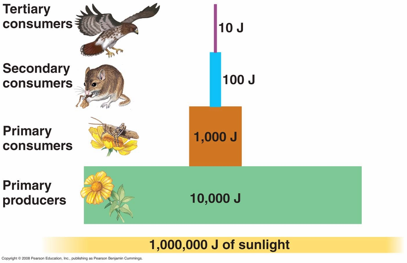 """the flow of energy Ecosystems are very complex they can contain hundreds or even thousands of  interacting species watch the following clip from nova titled, """"energy flow in."""