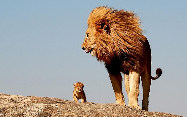 Lion HD