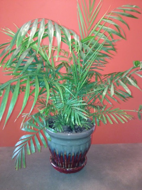 Houseplant Care Tips on holly house plant, willow house plant, angel house plant, chelsea house plant, lily house plant, little boy house plant, watermelon house plant, jasmine house plant, baby house plant, amelia house plant, rose house plant,