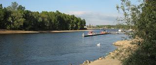Bild: Rheinufer mit Bäumen, an einem schönen Frühlingstag und auf dem Rhein schwimmt ein Schwan.