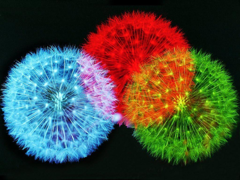 http://4.bp.blogspot.com/-sPuorB3RHp8/TiF4sXHeHbI/AAAAAAAABwc/R5FYSsgIZvc/s1600/Firework_wallpaper_5.jpg