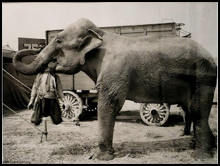 Funny Elephant in Circus