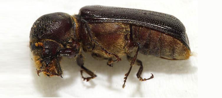Boletín Sociedad Andaluza de Entomología Vol. 4