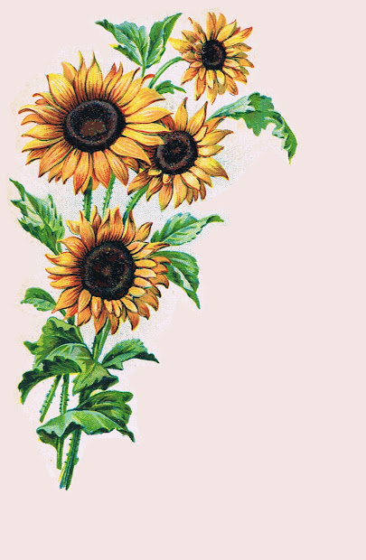 sunflower border clip art fall