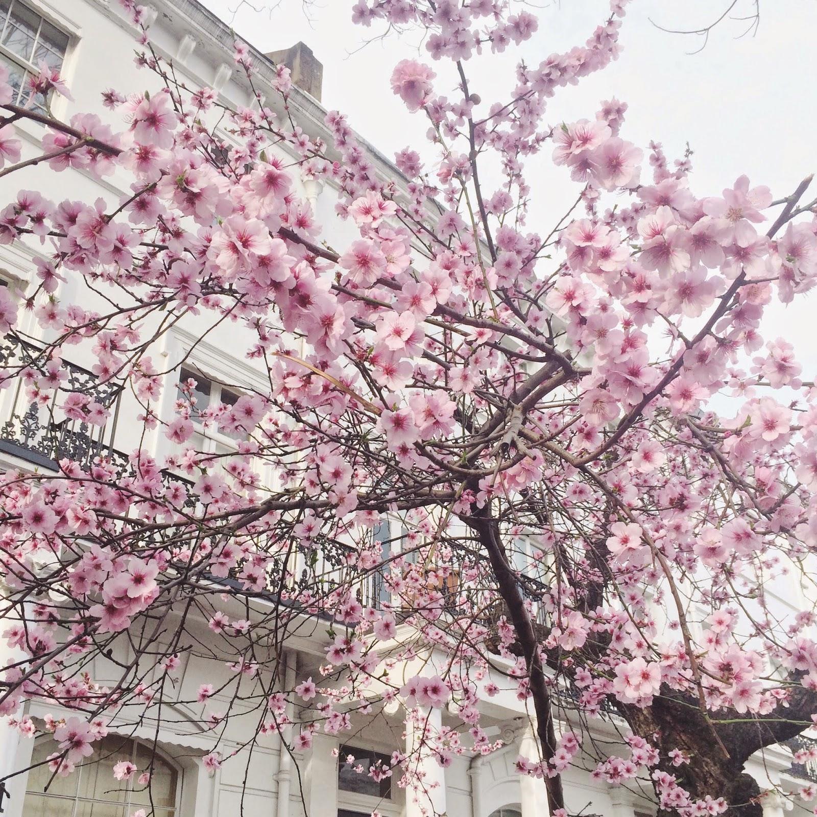 cherrytree, cherryblossom, spring, london, pink cherry tree