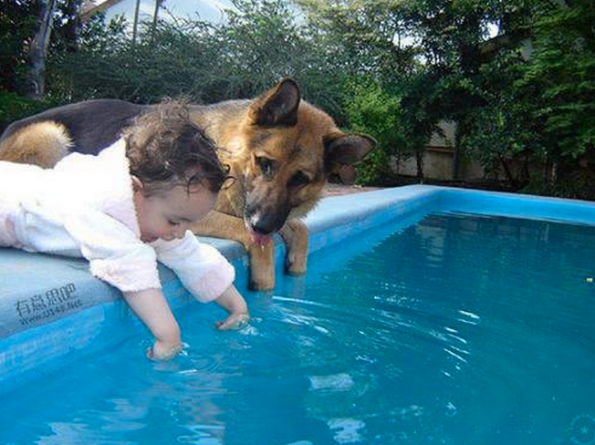 dog baby swimming pool