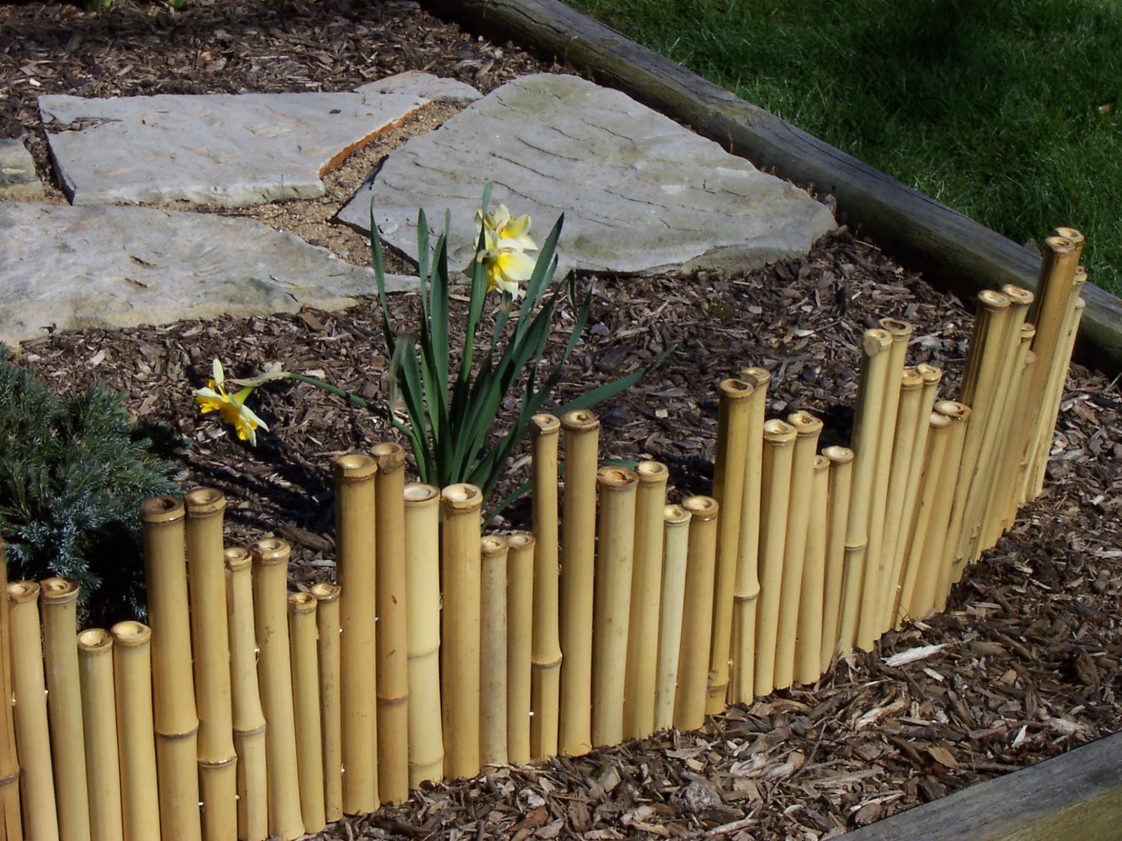 Bamboo grove photo bamboo garden fencing for Bamboo ideas for backyard