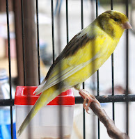 Tips Merawat Burung di Kala Kesibukan Mendera