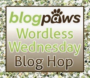 http://blogpaws.com/executive-blog/pet-parenting-health-lifestyle/wordless-wednesday/blogpaws-wordless-wednesday-blog-hop-belly-rubs/