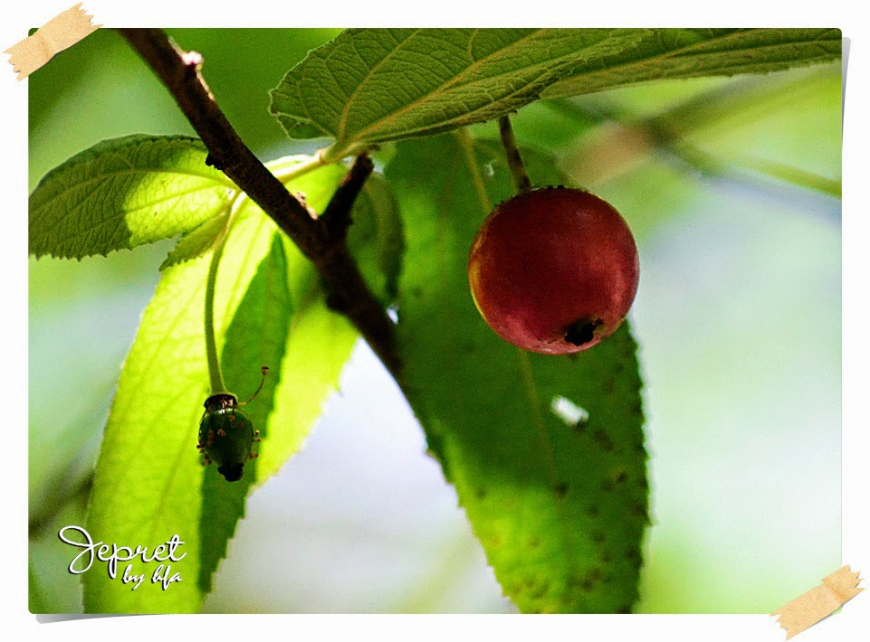 little red fruit