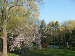 Spring in our backyard...