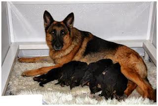 Quan sát kỹ những biểu hiện ban đầu của chó con sơ sinh.