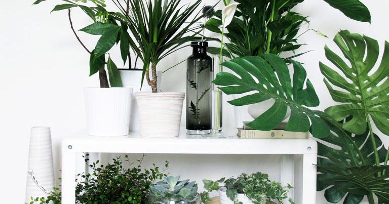 DECO CHAMBRE INTERIEUR: Plantes vertes
