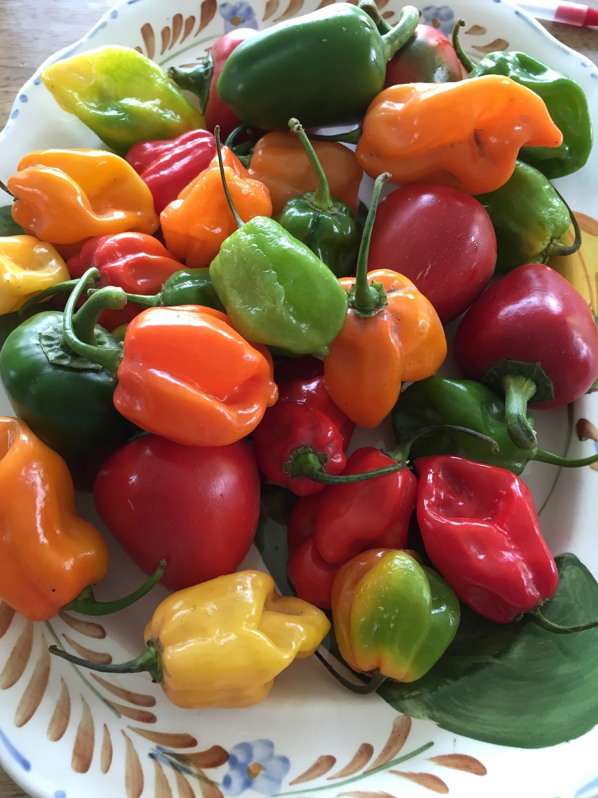 recipe: how many habaneros in a pound [18]