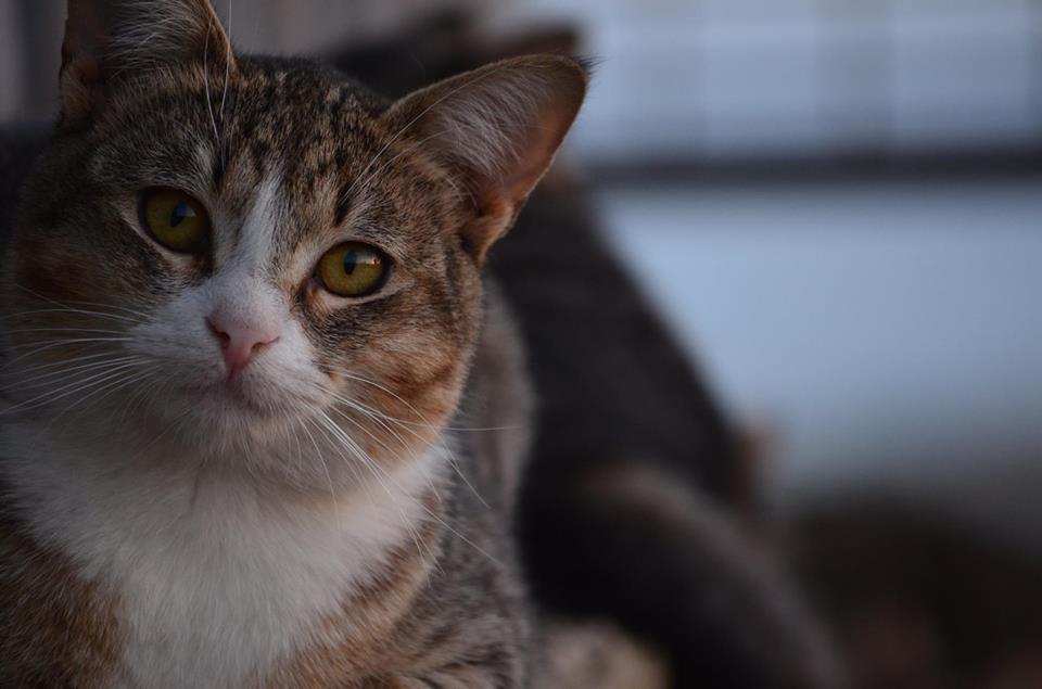 Gato de ojos hermosos