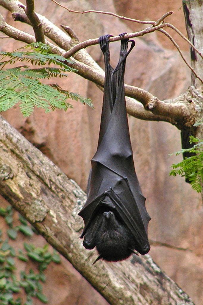 10 razões para você amar definitivamente os morcegos | Eu ...