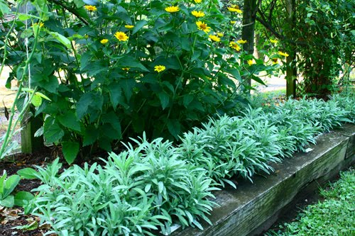 Landscape Borders Plants : Ground cover or edging plants for the edible garden landscape