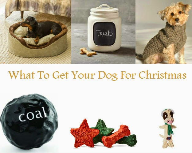 Beautifully Candid What To Get Your Furry Friend For