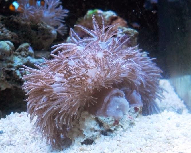 Bicycles and the Sea: Tropical marine aquarium