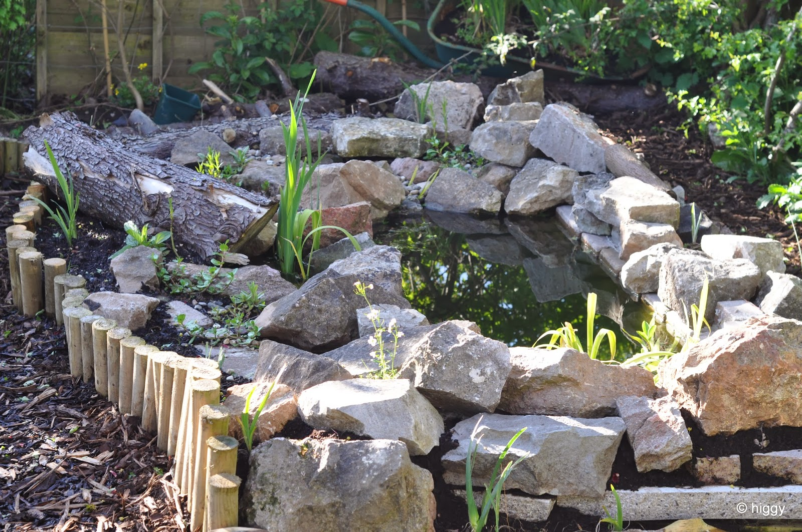 Higgy 39 s garden project as seen on bbc springwatch preparing garden ponds for winter and - Build pond wildlife haven ...
