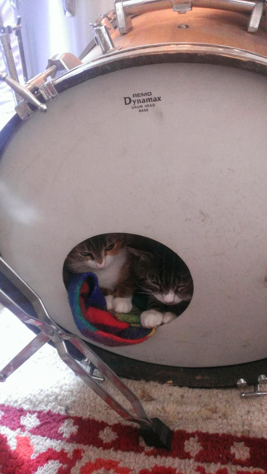 Funny cats - part 91 (40 pics + 10 gifs), two kitten sit inside drum kit