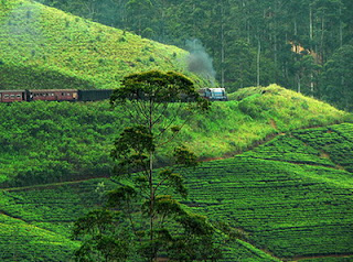 5 Best Tourist Attractions In Sri Lanka World Tourist Attractions