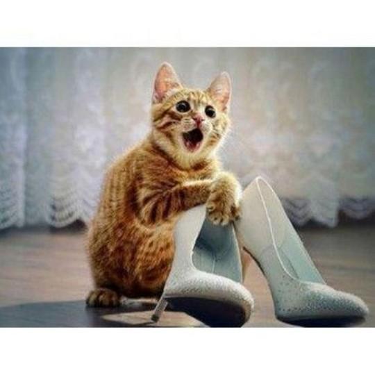 Image chaton chat rigolo photo de chat - Photo de chaton rigolo ...