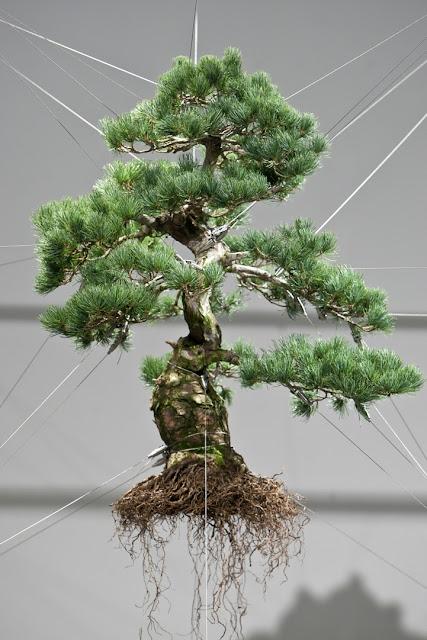 Karya Seni dari Pohon Bonsai