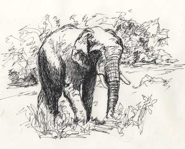 Easy Pen Drawings Of Animals   www.pixshark.com - Images ...