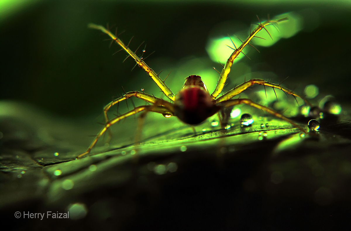 Laba-laba Bandung ~ AMAZING TUTORIAL PHOTOGRAPHY