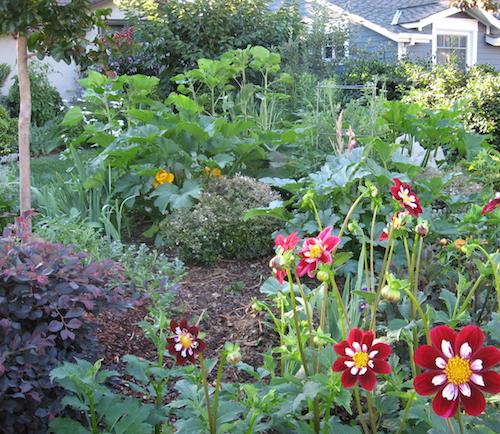 Backyard herb gardens - Artichoke Visit 11 Edible Gardens On The Edible Landscaping Tour
