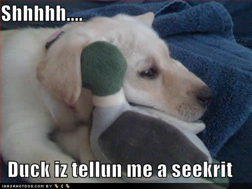 Funny animal pictures with captions for adults - photo#5